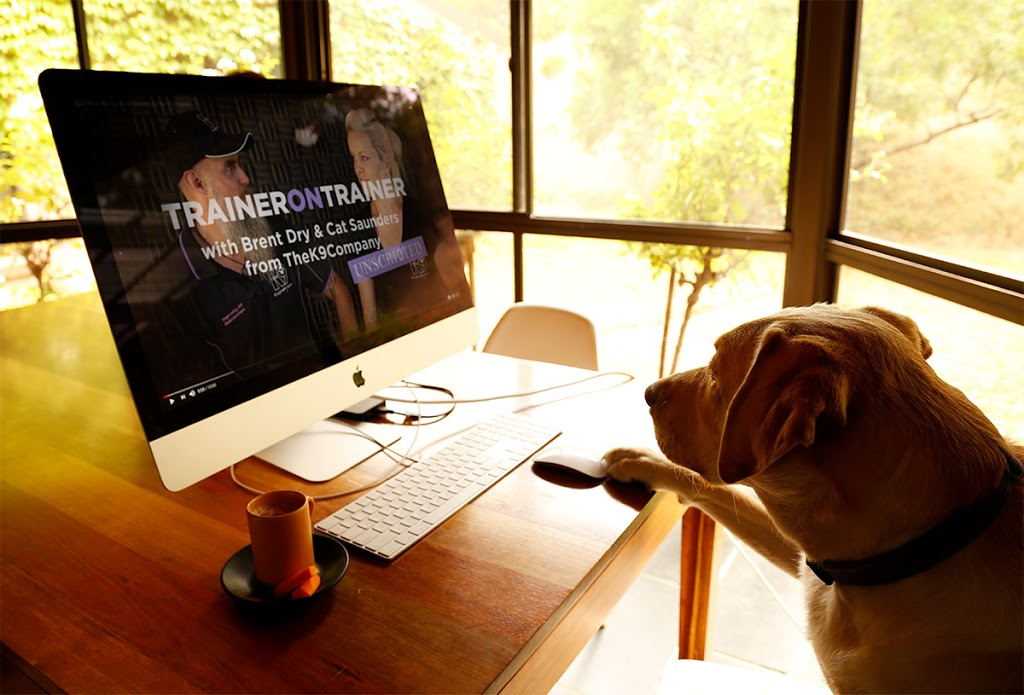 labrador dog sitting in front of a computer drinking puppychino