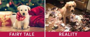gifting a puppy for christmas is not a good idea