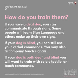 How do you train double merle dogs who are deaf, blind and/or both deaf and blind?