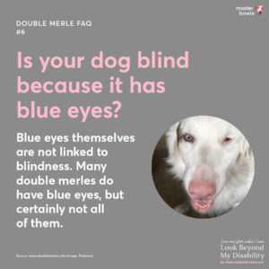 Dog blindness is not necessarily because it has blue eyes