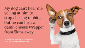 Selective hearing in dogs - is it a real thing?