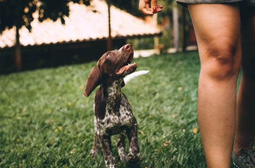 Improve your dog walk by playing fun games during walk