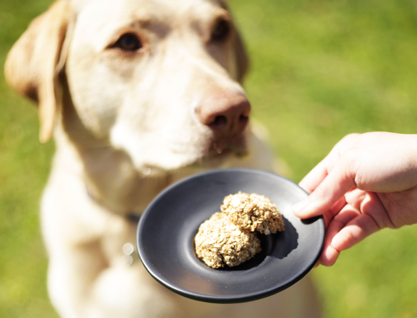 Easy Dog Biscuits Recipe Using Baby Food