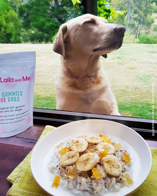 Copyright Master Bowie. Gummi bears porridge with Laila and Me DIY gummi bear mix for dogs.